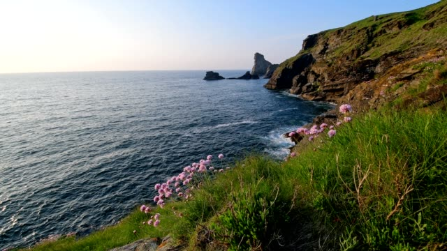 rocky shore at sunset in spring, trethevy, tintagel, cornwall, england, united kingdom, europe - wildflower stock videos & royalty-free footage