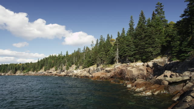 Rocky shore of Acadian national Park with pine trees