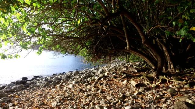 Felsenküste im geheimen Bucht auf der Insel Maui