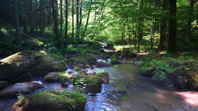 vídeos de stock, filmes e b-roll de rochoso riacho flui na idílica floresta primavera - floresta da bavária