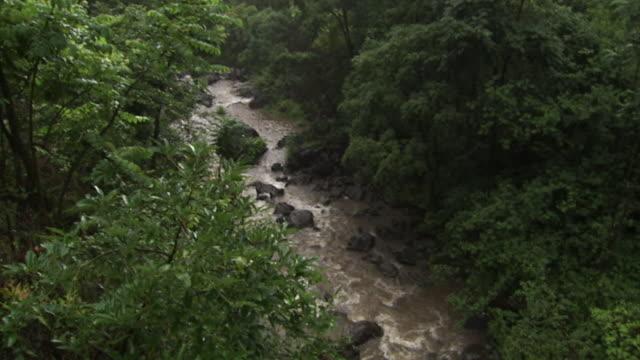 vídeos de stock e filmes b-roll de a rocky stream flows through tropical vegetation on a rainy day in hawaii. - tropical