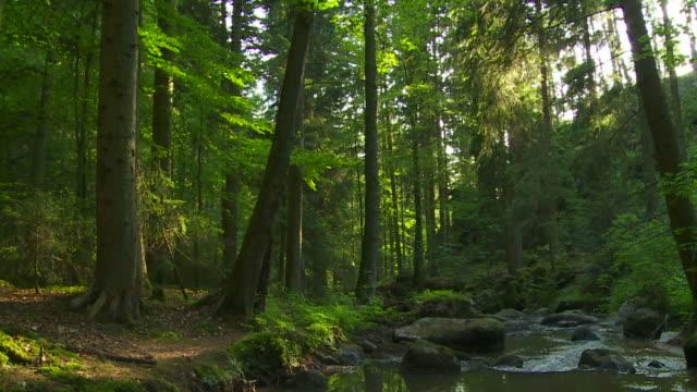 vídeos de stock, filmes e b-roll de rocky stream em floresta (efeito - floresta da bavária