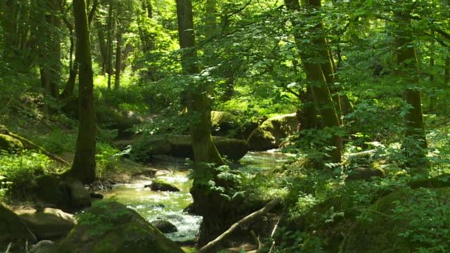 HD Rocky stream in forest
