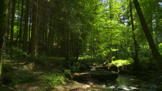 Rocky flusso nella foresta (panoramica