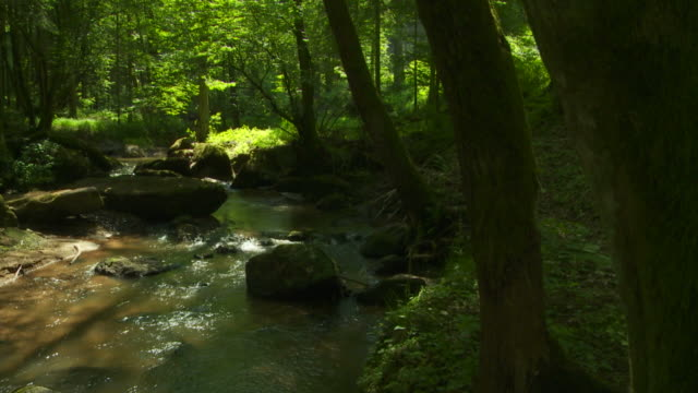 rocky stream in green forest crane shot - crane shot stock videos and b-roll footage