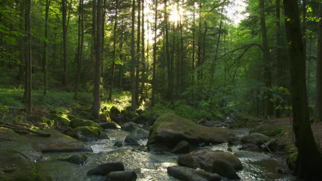 rocky flusso nella foresta al sole - acqua fluente video stock e b–roll