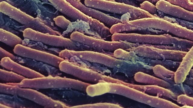 stockvideo's en b-roll-footage met rod cells - netvlies