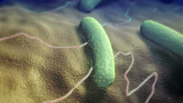 rod shaped bacteria - bacillus subtilis stock videos & royalty-free footage