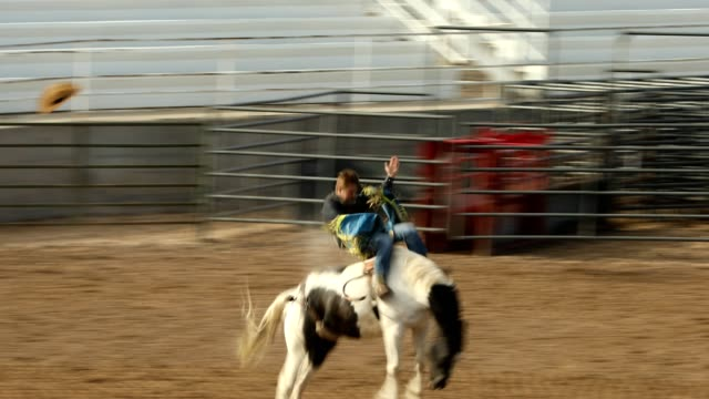 rodeo bucking bronco rodeo - bucking bronco stock videos & royalty-free footage