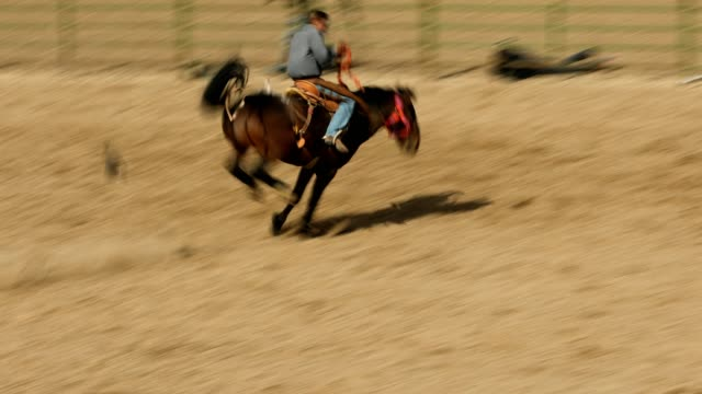 rodeo bucking bronco rodeo - rodeo stock videos & royalty-free footage