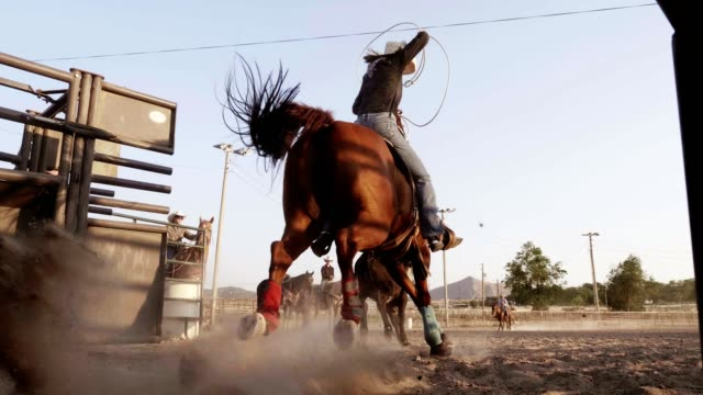 vídeos de stock, filmes e b-roll de rodeio cowgirl - faroeste
