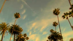Rodeo Drive palm trees at sunset - HD
