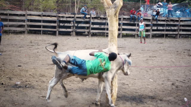 rodeo man falling down from a bull in slow motion - drongo stock videos and b-roll footage