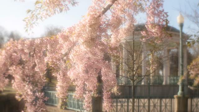stockvideo's en b-roll-footage met roger williams park dreamy - softfocus