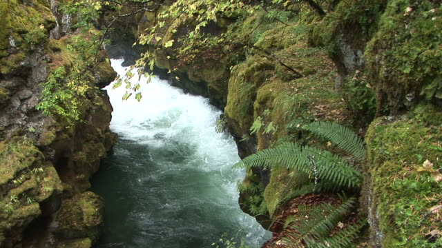 ms, ha, rogue river gorge, oregon, usa - stationary process plate stock videos & royalty-free footage