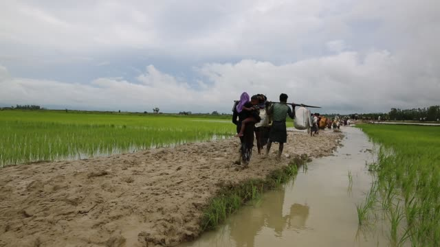 vídeos de stock, filmes e b-roll de rohingya people fled from ongoing military operation in myanmar rakhain state entered bangladesh walks to go to refugee camp in tknaff in bangladesh... - política e governo