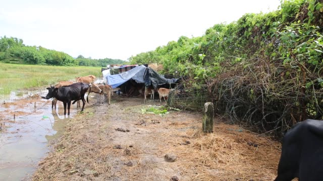 rohingya people fled from ongoing military operation in myanmar rakhain state entered bangladesh and staying in no man's land in coxs bazaar in... - cox basar stock-videos und b-roll-filmmaterial
