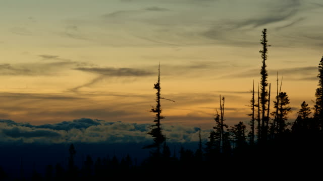 Roiling clouds at dusk sunset behind spires of trees forest silhouette