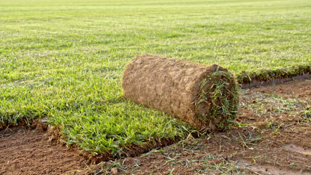 ds rolled sod on the field - zolla video stock e b–roll