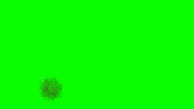 rolling bush (tumbleweed) animation (green screen) - hooved animal stock videos & royalty-free footage