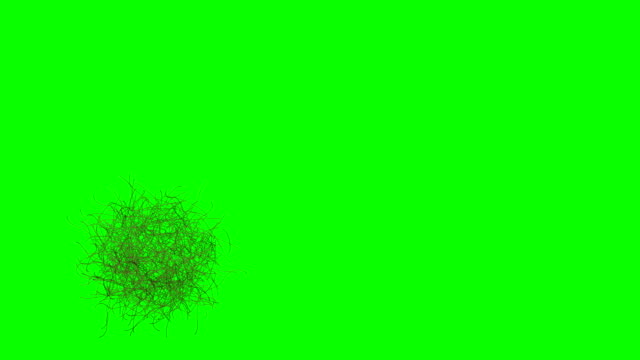 rolling bush (tumbleweed) animation (green screen) - horse family stock videos & royalty-free footage