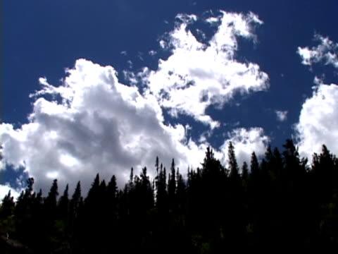 vídeos de stock, filmes e b-roll de rolling de lapso de tempo de nuvens de avião - sequoia sempervirens