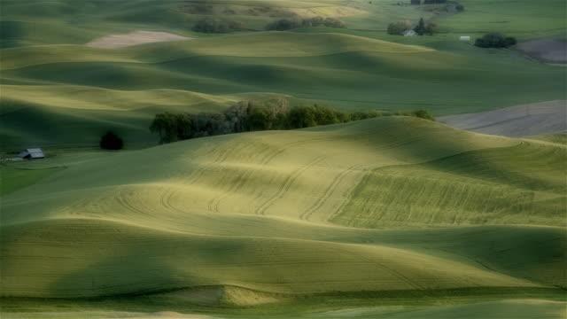 ha ws pan rolling green hills and farmland / palouse, washington state, usa - palouse stock videos & royalty-free footage