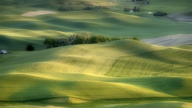 rolling hills and fields of wheat, palouse, washington - hügellandschaft stock-videos und b-roll-filmmaterial