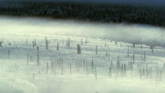 Rolling ice fog and hemlock trees near Eureka Alaska.