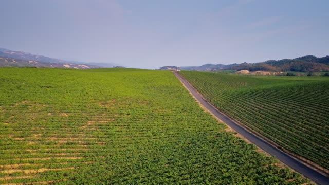 Rolling Landscape Covered in Vineyards