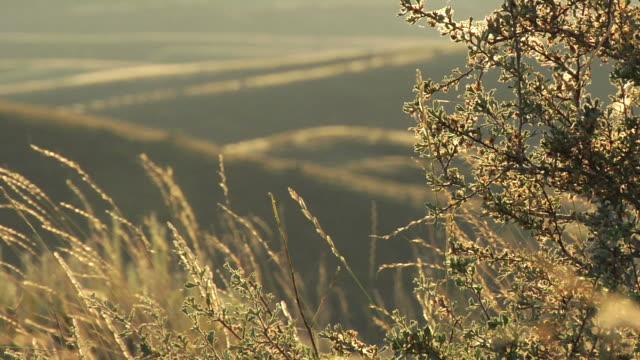 どこまでも続く景観 - セージブラッシュ点の映像素材/bロール