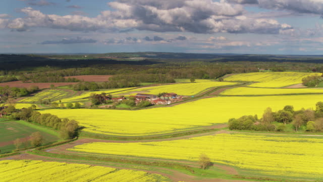 Rolling Landscape with Rapeseed Fields and Farms in West Sussex - Drone Shot