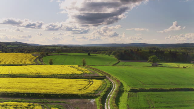 rolling landscape with rapeseed fields - drone shot - sussex stock videos and b-roll footage