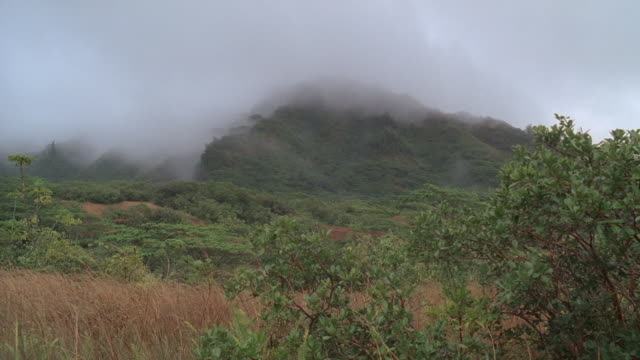 ws rolling meadow covered in tropical vegetation at base of mountainous outcrop with fog surrounding the mountain's peak / oahu, hawaii, united states - outcrop stock videos & royalty-free footage