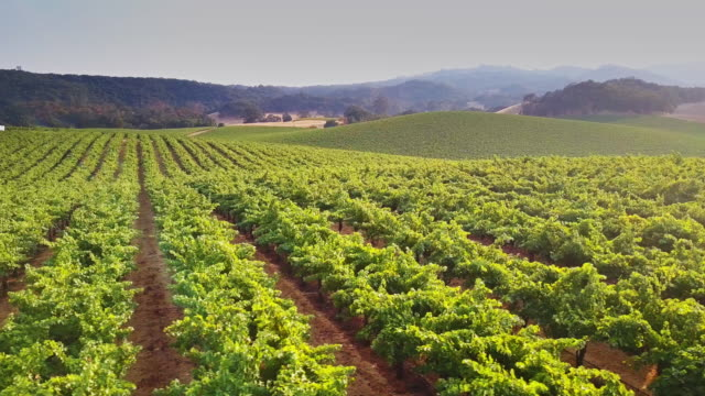 rolling northern california landscape with vineyards - vineyard stock videos & royalty-free footage