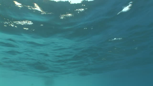 Rolling surface of blue sea water w/ reflection of blue sky