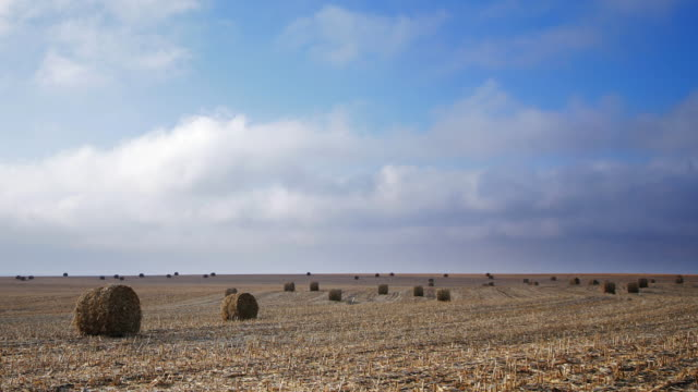 rolls of hay. time lapse. - hay texture stock videos & royalty-free footage
