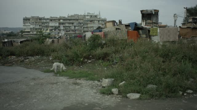 vídeos de stock e filmes b-roll de roma settlement in bulgaria, stray dog in foreground - bulgária