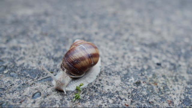 roman snail time lapse - snail stock videos & royalty-free footage
