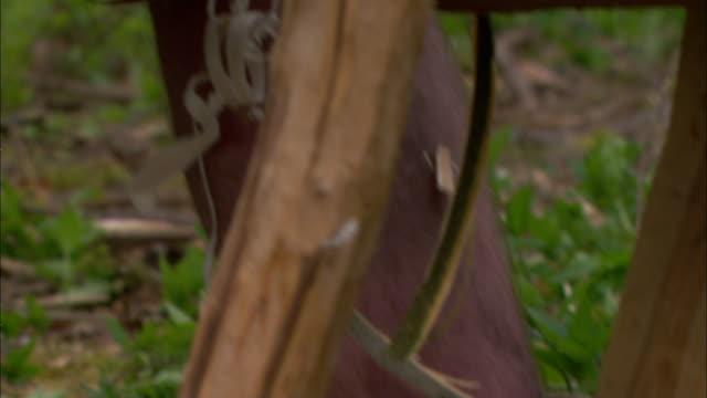 vídeos y material grabado en eventos de stock de a roman soldier shaves bark off a log. - centurión