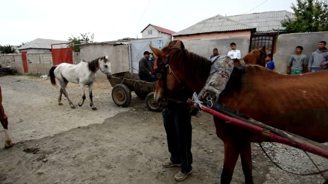 romania, animals - rumänien stock-videos und b-roll-filmmaterial