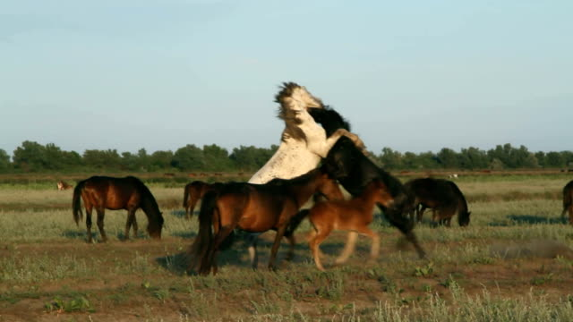 romania, the horses in danube delta - river danube video stock e b–roll