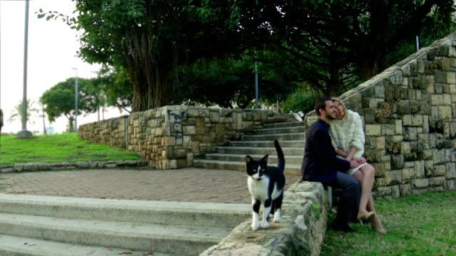 vídeos y material grabado en eventos de stock de pareja romántica en el parque y un gato caminando por - en el regazo