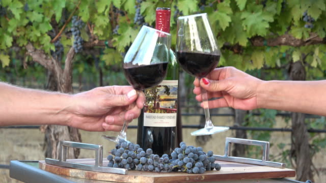 romantic picnic wine tasting. couple manking a toast in a vineyard setting - grape stock videos & royalty-free footage