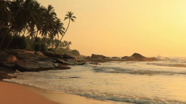 romantic sunset on a tropical beach with palm trees. - sri lankan culture stock videos & royalty-free footage