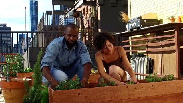 Jardinage de toit - SLOW MOTION
