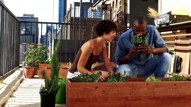 vídeos de stock e filmes b-roll de roof gardening - slow motion - jardinagem