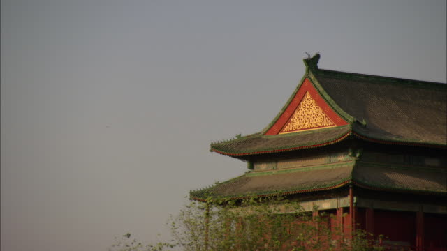 ms rooftop of temple with branches blowing in wind, beijing, china - mittelgroße tiergruppe stock-videos und b-roll-filmmaterial
