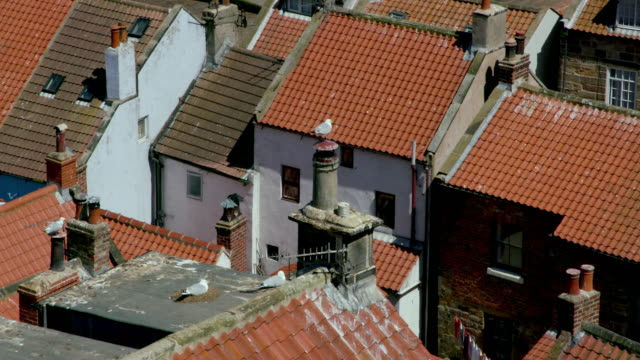 rooftop view of houses and nesting european herring gull staithes - animal nest stock videos & royalty-free footage
