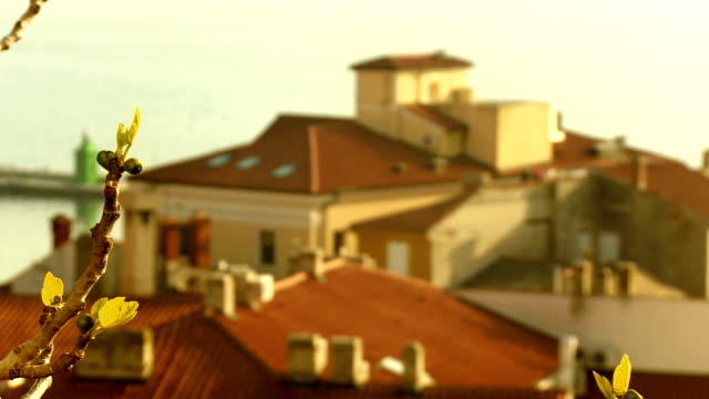 rooftops of an old coastal town - twig stock videos & royalty-free footage
